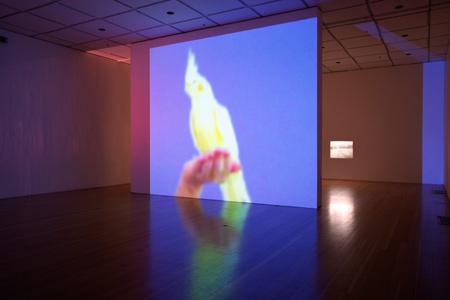Victoria Fu, Cult of Splendor, 2014, installation view, photo by Elan Greenwald ©UCI UAG